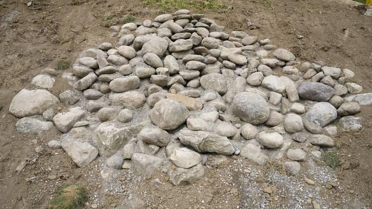 Im Rebberg Hasleren finden sich an der Böschung neu vier Steinlinsen für Eidechsen.