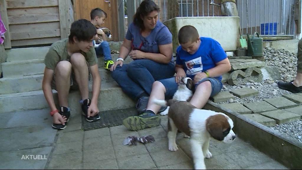 Gewinner-Familie von Namenswettbewerb besucht Bernhardiner-Welpen