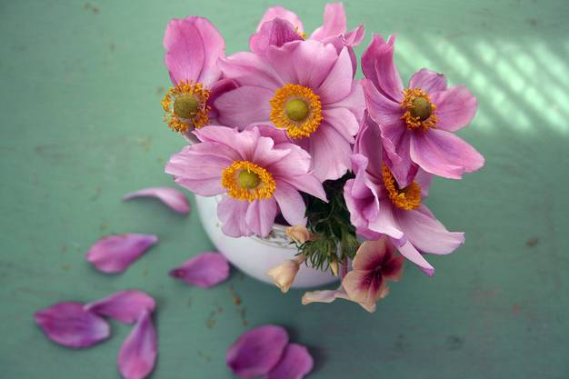 Die meisten Schnittblumen vertragen Temperaturen bis 5 Grad Celsius und bleiben länger frisch, wenn sie