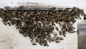 Bienen sammeln sich an einem Stock (Symbolbild)