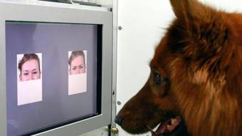 Ein Hund vor der Versuchsanlage zur Unterscheidung von Mimiken