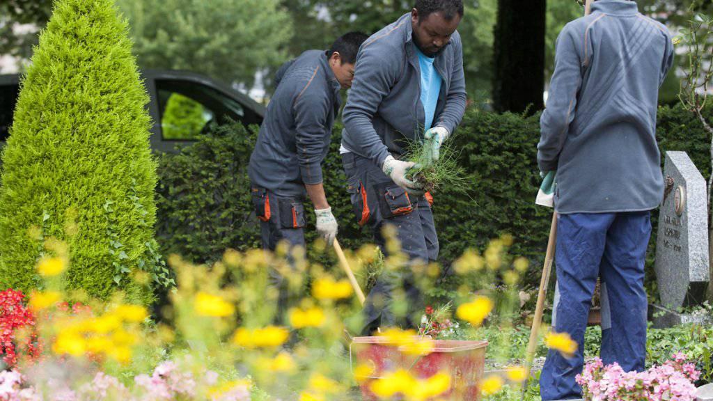 Künftig soll es für Arbeitgeber einfacher sein, Asylsuchende und vorläufig Aufgenommene anzustellen. Mit dieser und weiteren Massnahmen will das Parlament die Integration fördern. Im Bild Asylsuchende bei der Arbeit auf einem Friedhof.