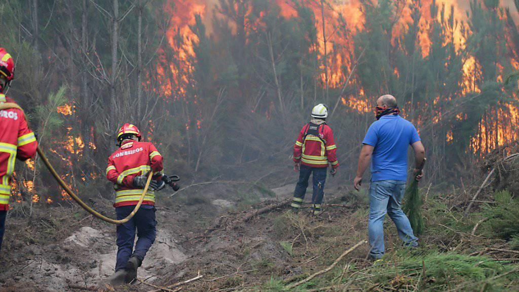 Weltweit haben Waldbrände zugenommen. Vor allem Portugal ist stark betroffen: Mitte Oktober kämpften 6000 Feuerwehrleute gegen Waldbrände im ganzen Land.
