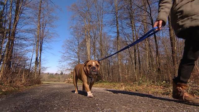 Mit dem Hund über Kantonsgrenze spazieren kann ganz schön teuer werden