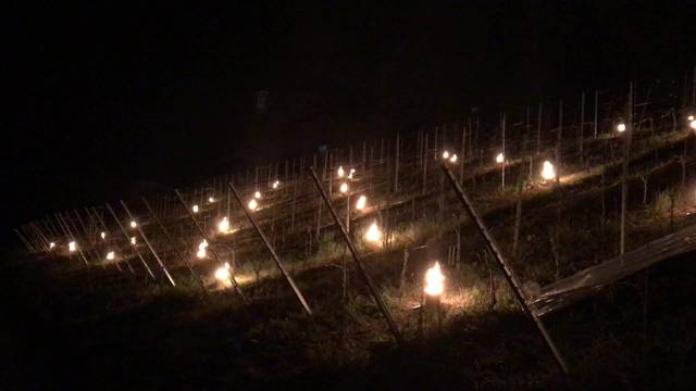 Aargauer Weinbauern kämpfen mit Frostschutzkerzen gegen Schäden an ihren Reben