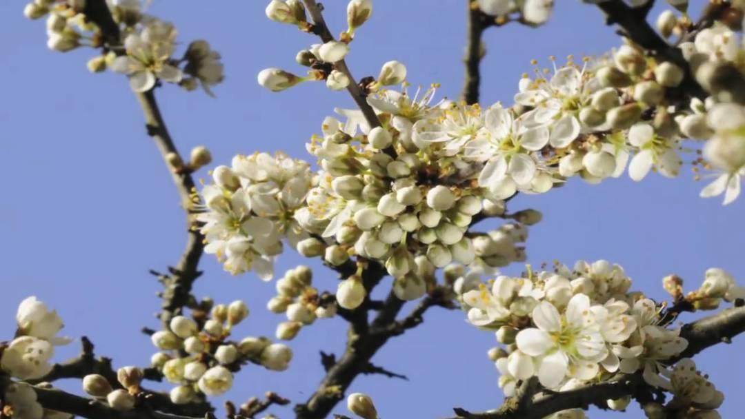 Macht einfach nur glücklich: Blumen-Erblühen in 800-facher Geschwindigkeit.