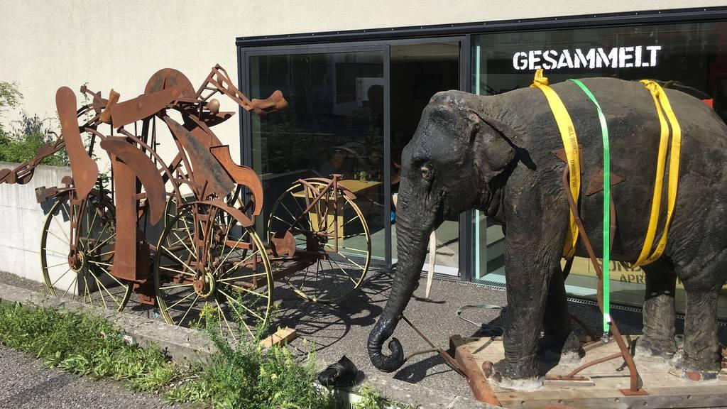 Elefant Jenny zurück in Aarau