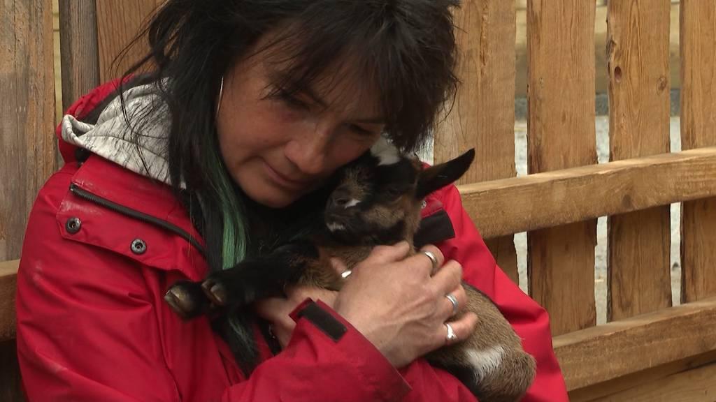 Oltner Tierpark sucht verzweifelt nach seinen Baby-Ziegen