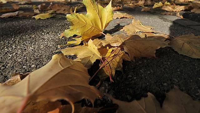 Herbstlich verfärbte Blätter liegen am Rheinweg in Basel