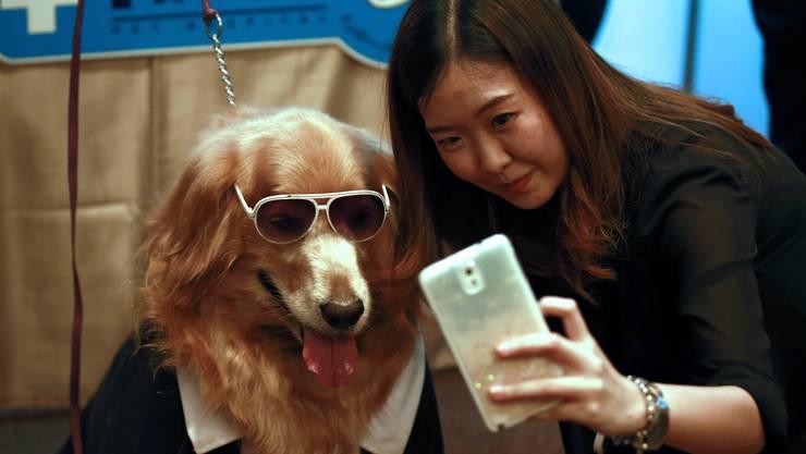 Für einen Menschen machen Hunde alles: Sogar ein Selfie mit fremdem Frauchen.