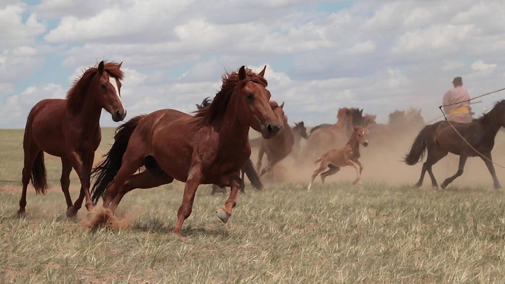 Forschende knacken den Ursprung der Domestikation von Pferden