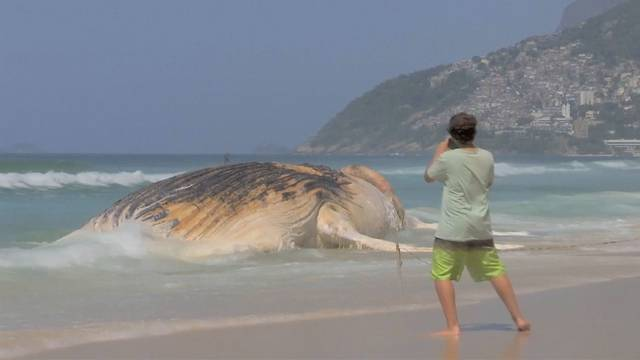 Selfie mal anders: Wal-Kadaver als Ferien-Foto