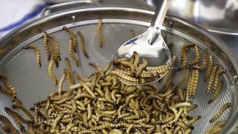 Mehlwürmer sind gute und günstige Proteinlieferanten.