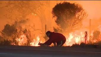 Noch immer wüten im US-Bundesstaat Kalifornien mehrere Waldbrände. Während Zehntausende auf der Flucht vor den lodernden Flammen sind, riskiert dieser junge Mann sein Leben für einen kleinen Hasen.