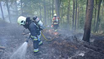 Die Feuerwehr beim Löschen im Wald bei Kleinlützel.
