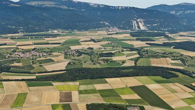 Plastik-Folien werden auch im Ackerbau viel verwendet, bleiben aber oftmals liegen. (Symbolbild)