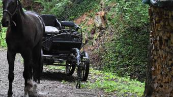 Eines der beiden Pferde wurde bei einem Kutschenunfall im Kanton St. Gallen nur leicht verletzt. Der Kutscher musste ins Spital gebracht werden.