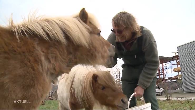 Zeit, um Adieu zu sagen: Walter Huber hat für seine beiden Ponys neue Besitzer gefunden. Screenshot TeleM1