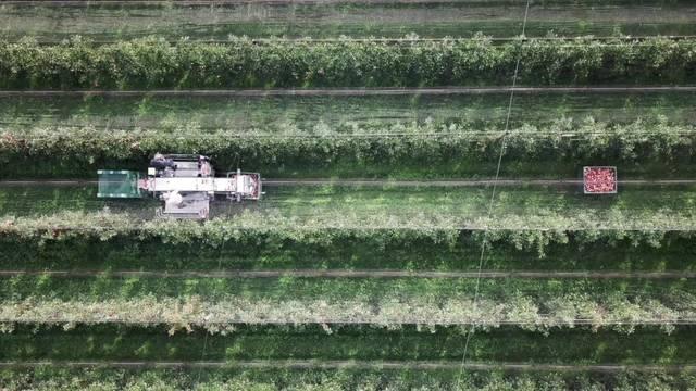 Apfelernte: Frostschäden setzen Thurgauer Obst zu