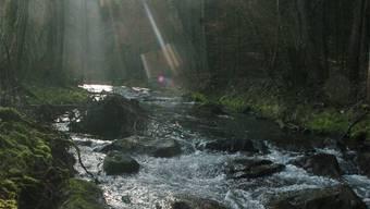 Die Surb entspringt im zürcherischen Wehntal und mündet bei Döttingen in die Aare.