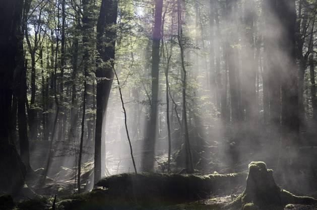 Die TV-Serie «Top of the Lake» von Jane Campion besticht durch einzigartige Landschaftsaufnahmen.