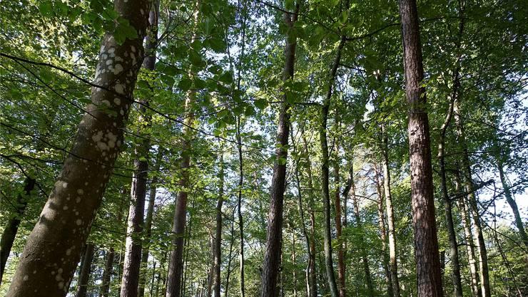 Bäume sind Symbole des Lebens - aber auch der Ruhe und des Friedens. (Symbolbild)