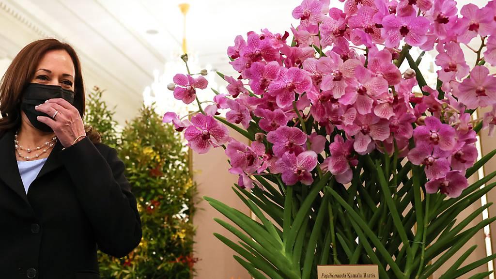 Kamala Harris (l), US-Vizepräsidentin, steht neben Papilionanda Kamala Harris (r) während einer Orchideentaufe im Istana. Singapur hat anlässlich des Besuchs von US-Vizepräsidentin Kamala Harris eine Orchidee nach der demokratischen Politikerin benannt. Foto: Evelyn Hockstein/Pool Reuters/AP/dpa