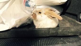 Das Kaninchen wurde lebend entsorgt.