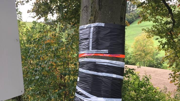 Der Baum musste eingebunden werden (Foto vom 2. Oktober 2017) ...