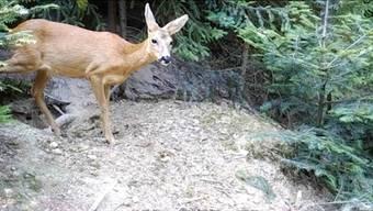 Kaum zu glauben, wie viele Tiere sich an einem einzigen Fleckchen Wald Tag und Nacht tummeln.