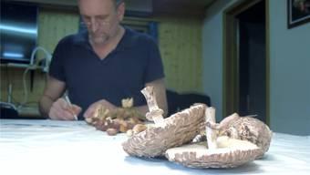 Harald Schmid trägt die gesammelten Pilze im Kontrollschein ein. Im Bild: Safranschirmlinge.ren