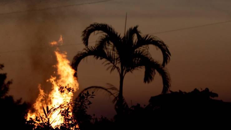 Die Brände im Amazonas-Gebiet legen im Vergleich mit dem Vorjahr wieder zu. (Archivbild)