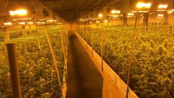 Sechs Angreifer überfielen im Februar 2015 die bewachte Indoor-Hanfanlage in Altstätten SG und forderten Geld und Marihuana. (Archivbild)