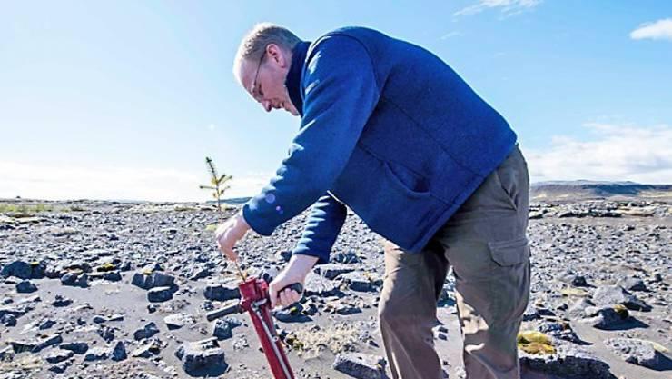 Hreinn Oskarsson, Director beim Icelandic Forest Service, hilft mit, Bäume auf dem Lava-Gelände bei Thorlakshofn zu pflanzen.  (Photo by Halldor KOLBEINS / AFP)