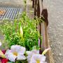 Blumenkistli Bremgarten