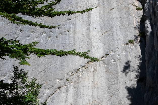 Und so sehen sie aus: Entstanden sind sie vor mehreren Millionen Jahren, als Dinosaurier an dieser Stelle noch über Tümpel wateten. Die Spurenschicht versank und wurde durch Druck versteinert. Und als sich Millionen Jahre später der Jura faltete, sind auch die Spuren wieder hervorgekommen.