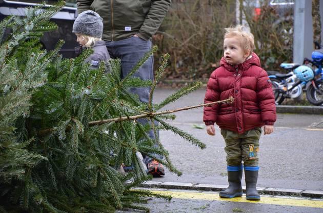 Der Baum ist entweder zu gross oder der Werfer zu klein.
