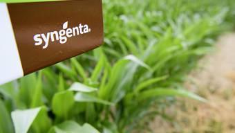 Niedrige Rohstoffpreise und schlechtes Wetter haben Syngenta von Januar bis Juni das Leben schwer gemacht. Der Umsatz sank um 2 Prozent. (Archiv)