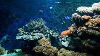 Breite Front kämpft für das Ozeanium des Basler Zolli