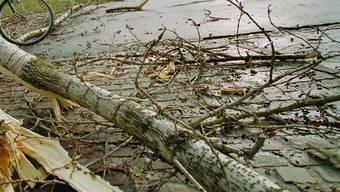 ARCHIV - ZUM 20. JAHRESTAG DES STURMS LOTHAR AM DONNERSTAG, 26. DEZEMBER 2019, STELLEN WIR IHNEN FOLGENDES BILDMATERIAL ZUR VERFUEGUNG - Umgeknickte Baeume an der Seepromenade in Zuerich, Sonntag, 26. Dezember 1999. Der orkanartige Sturm Lothar fegte ueber die Schweiz hinweg und hinterliess riesige Schaeden. (KEYSTONE/Michele Limina)