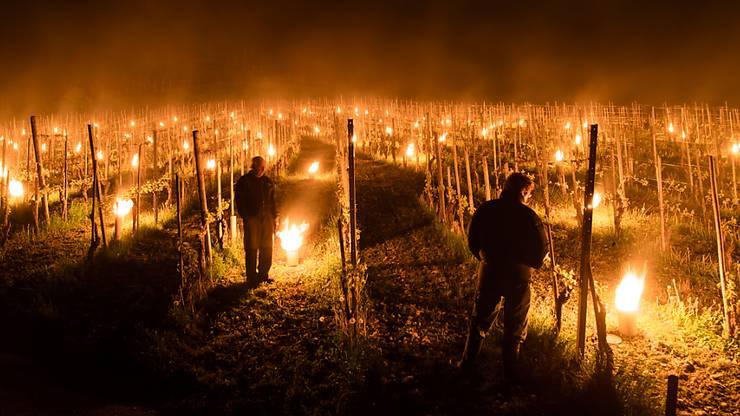 Mit Frostkerzen versuchen Winzer in Fläsch in der Bündner Herrschaft ihre Reben zu schützen.