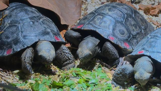 101 junge Schildkröten im Zürcher Zoo