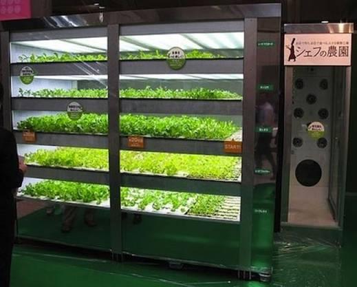 Salat-Automat: Frischer Salat kommt in Japan nicht unbedingt vom Feld, sondern aus dem «The Chef's Farm»-Automat.