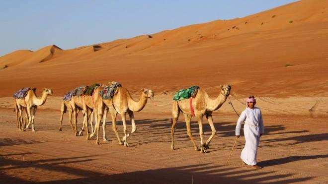 So wird das Harz transportiert: Kamelkarawane mit Führer in der Wüste von Oman. Foto: Brünjes
