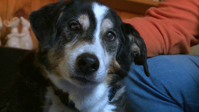 Bäri ist 18 Jahre alt – und damit wohl einer der ältesten Hunde der Schweiz
