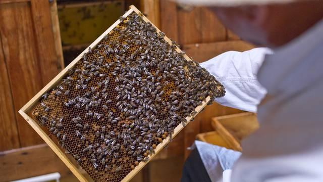 Immer mehr Bienenvölker sterben (Archiv)