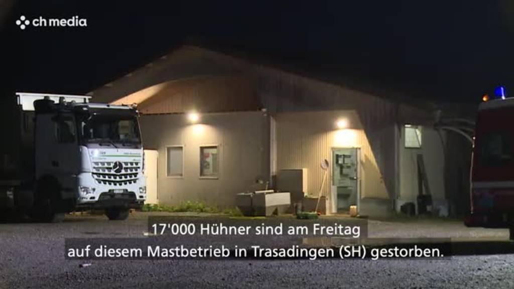 17'000 Hühner in Trasadingen sterben in Hochwasser