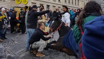 Pferde-Unfall Basler Fasnacht