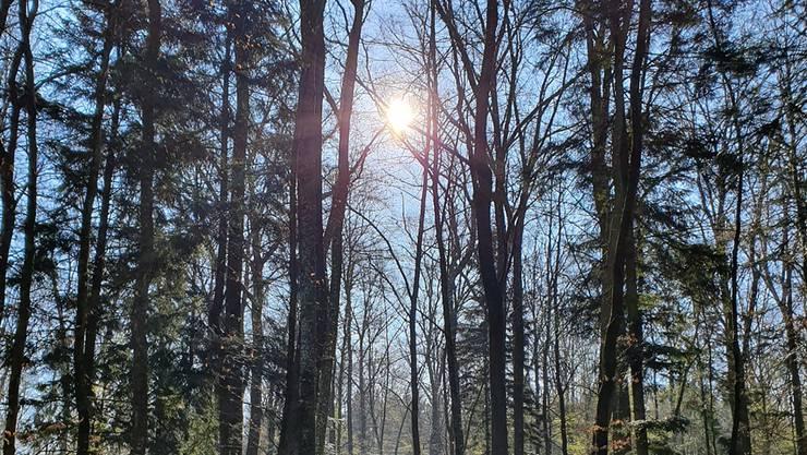 Bei dem schönen Wetter werden Wälder in Coronazeiten immer öfter aufgesucht.