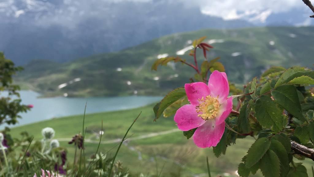 Hast du diese Saison schon Wildrosen entdeckt?